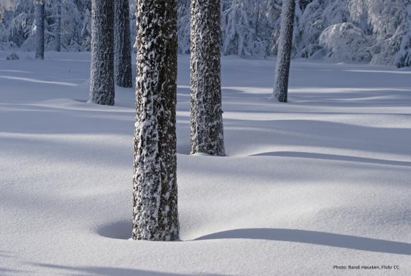 winter season post